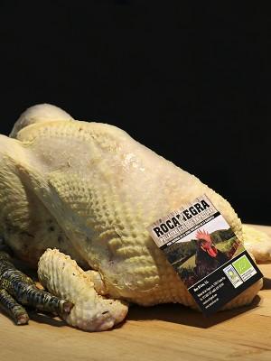 pollastre-rocanegra-300x400